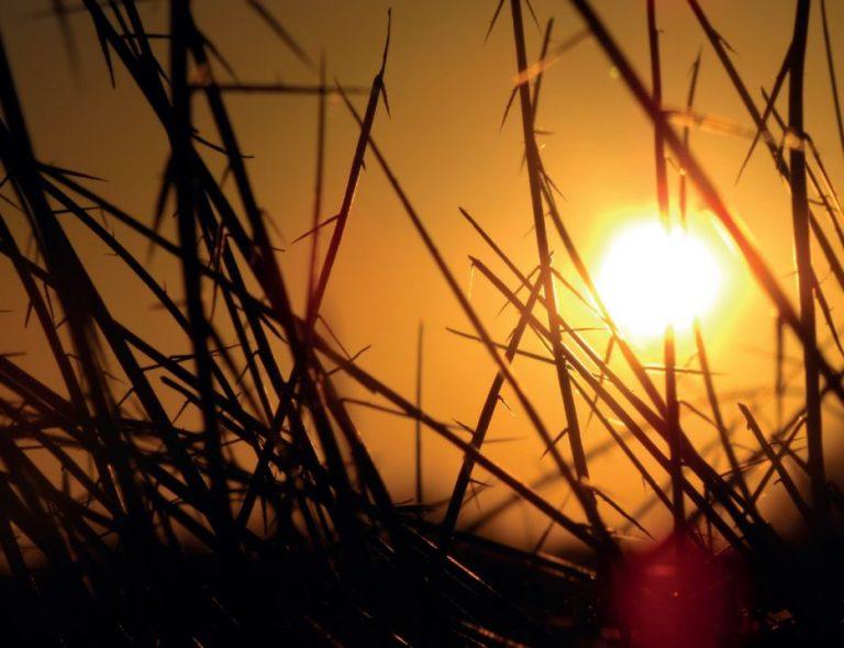 Second Ashra of Ramadan – Making hay while the sun shines